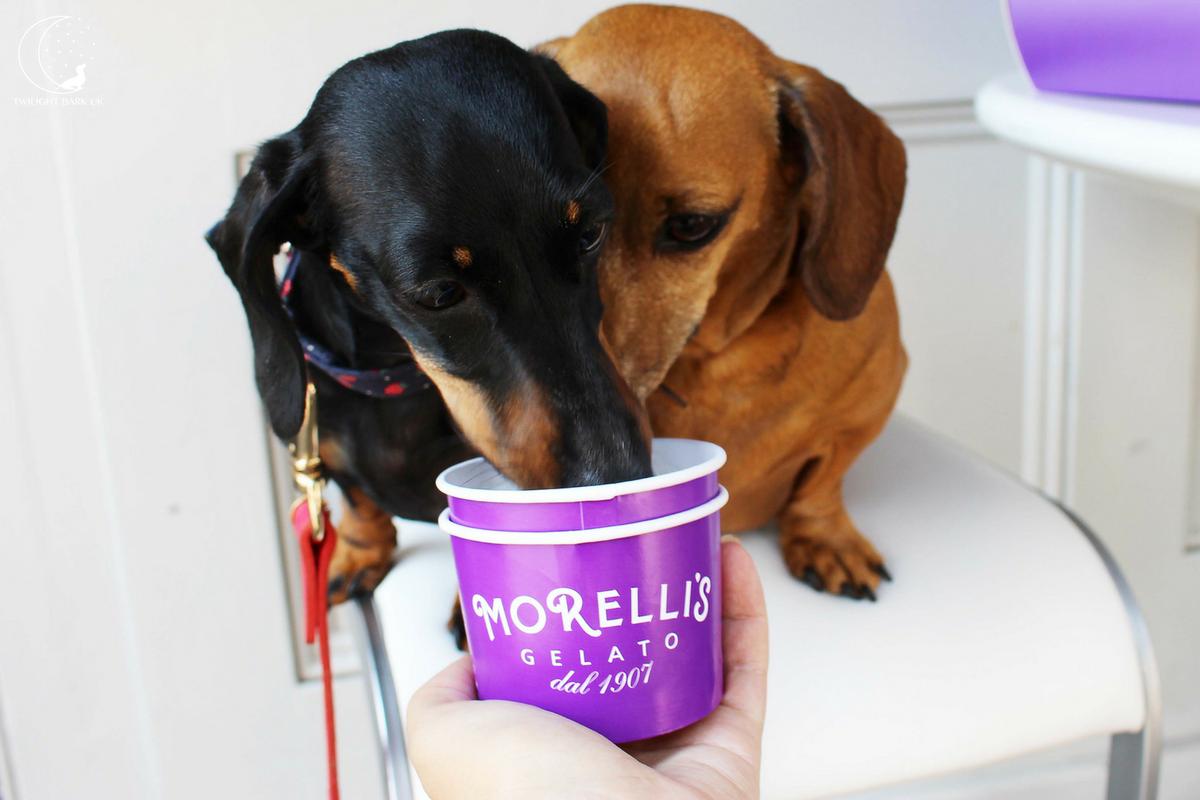 Dogs eating Morelli's Gelato