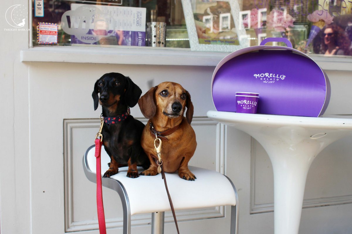 Two dachshunds outside Morelli's Gelato