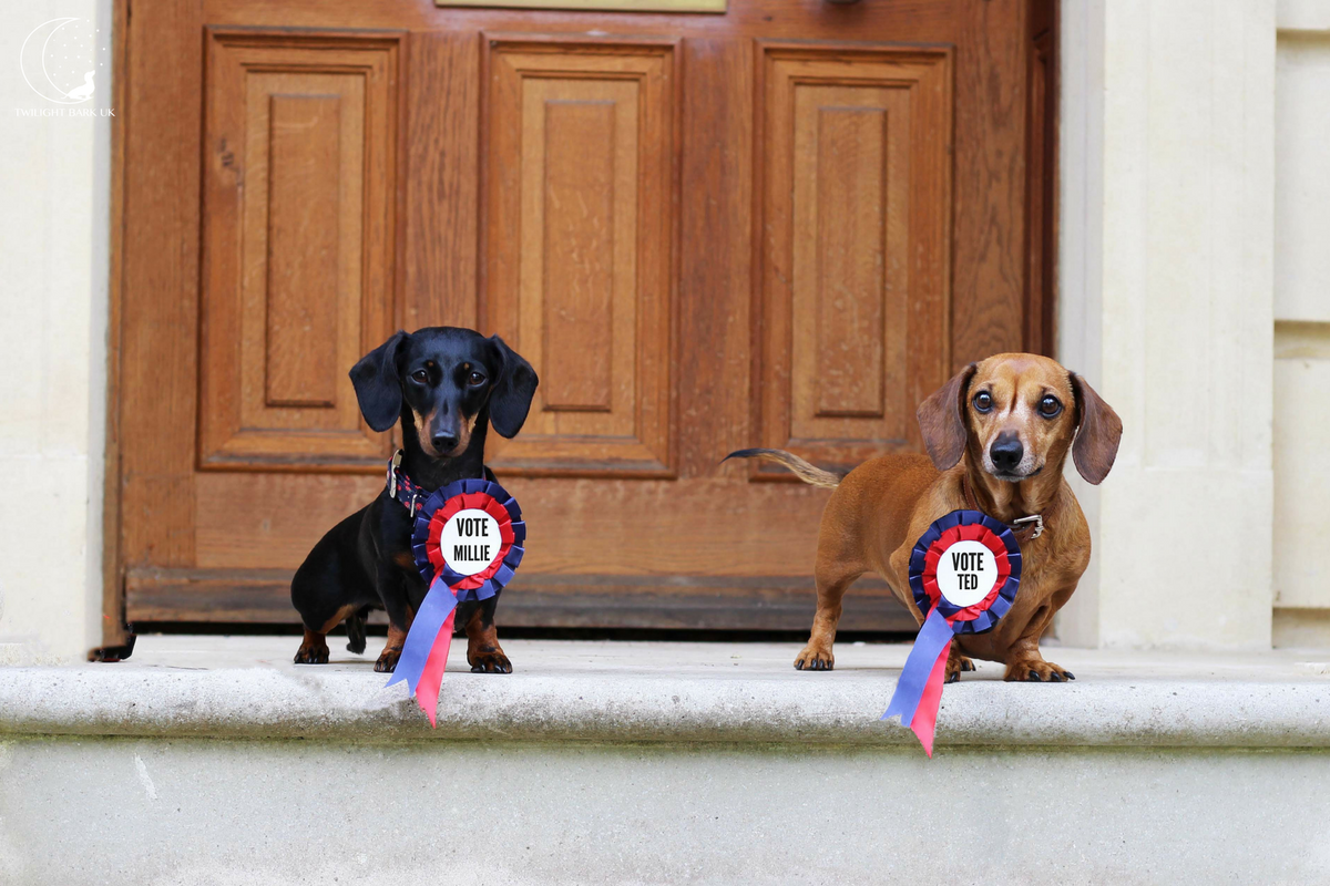 The General Election Dogs Manifesto